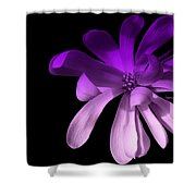 Purple Magnolia 2 Shower Curtain