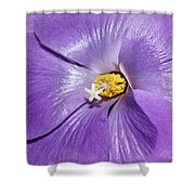 Purple Mallow Mist Shower Curtain