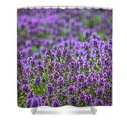 Purple Meadow 3 Shower Curtain