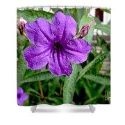 Purple Mexican Petunia Shower Curtain