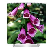 Purple Mouth Flowers Shower Curtain