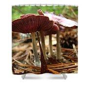 Purple Mushroom 2 Shower Curtain