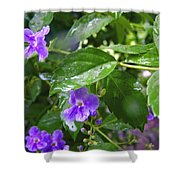 Purple On Green With Raindrops Shower Curtain