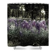 Purple On The Forest Floor Shower Curtain