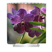 Purple Orchid Beauty Shower Curtain