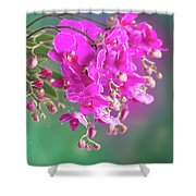 Purple Orchid Branch Shower Curtain