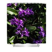 Purple Orchid Plant Shower Curtain