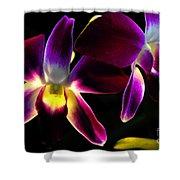 Purple Orchids 2 Backlit Shower Curtain