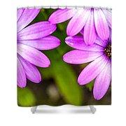 Purple Petals Shower Curtain
