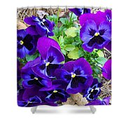 Purple Pansies Shower Curtain