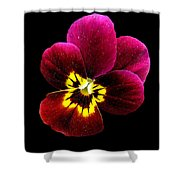 Purple Pansy On Black Shower Curtain