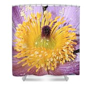 Purple Pasque Flower With Pollen Shower Curtain