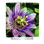 Purple Passion Bloom Shower Curtain