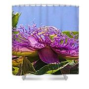 Purple Passion Flower  Shower Curtain
