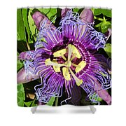 Purple Passion Flower Shower Curtain