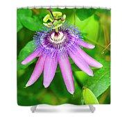 Purple Passion Vine Shower Curtain