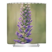 Purple Perfection Shower Curtain