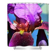 Purple Petals Four  Shower Curtain