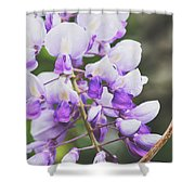 Purple Petals Shower Curtain