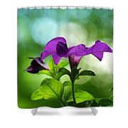 Purple Petunia On A Cool Spring Day Shower Curtain