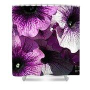 Purple Petunia Paradise Shower Curtain