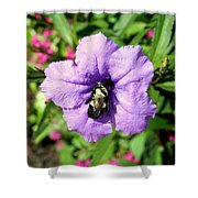 Purple Petunia With A Bee Shower Curtain