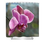 Purple Phalaenopsis Orchid Shower Curtain