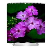 Purple Phlox By Earl's Photography Shower Curtain