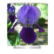Purple Pleaser Shower Curtain