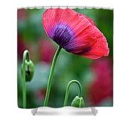Purple Poppy Flower Shower Curtain