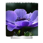 Purple Poppy Mona Lisa Shower Curtain