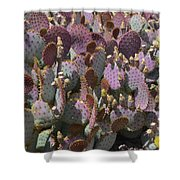 Purple Prickly Pear 2 Shower Curtain