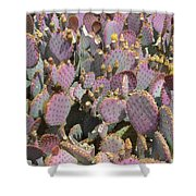 Purple Prickly Pear 3 Shower Curtain