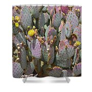 Purple Prickly Pear 1 Shower Curtain