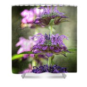 Purple Promises Shower Curtain