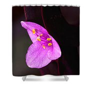 Purple Queen Shower Curtain