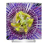 Purple Radial Shower Curtain