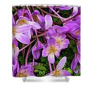 Purple Rain Lilies Shower Curtain