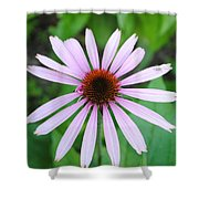 Purple Rays Shower Curtain