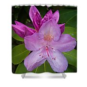 Purple Rhododendron Shower Curtain