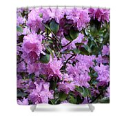 Purple Rhododendrons Shower Curtain