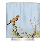 Purple Roller Shower Curtain