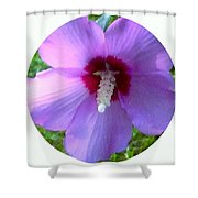 Purple Rose Of Sharon In Circle Frame Shower Curtain