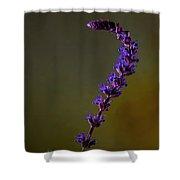 Purple Salvia Flower Shower Curtain