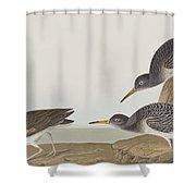 Purple Sandpiper Shower Curtain