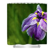 Purple Siberian Iris Flower Closeup Shower Curtain