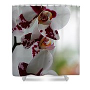 Purple Splash Orchid 1 Shower Curtain