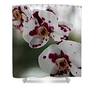 Purple Splash Orchid 2 Shower Curtain