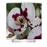Purple Splash Orchid 3 Shower Curtain