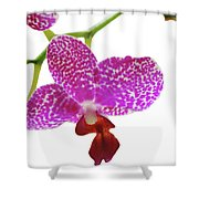 Purple Spotted Orchid On White Shower Curtain